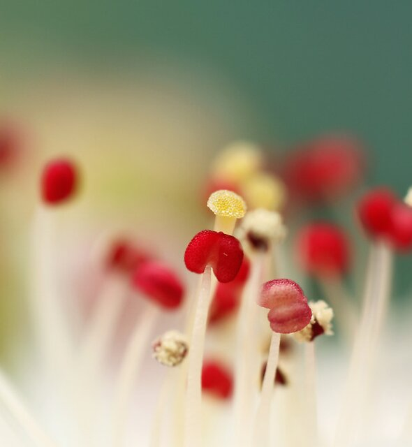 Flower Candy by Sharon Johnstone