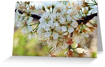 Tree blossoms by ♥⊱ B. Randi Bailey