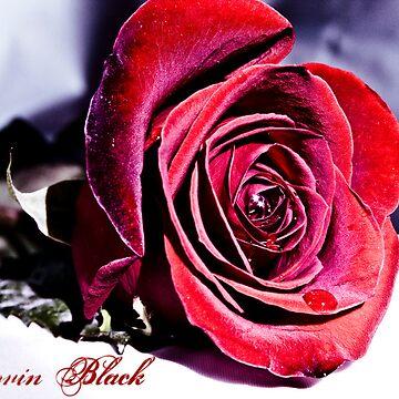 The Red Valentine Rose by KerovinBlack