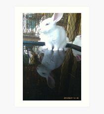 Cool bunny wade-N Pool Art Print