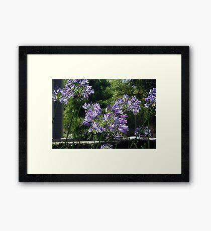 Purple in CA Framed Print