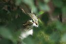Hidden Hunter by Stephen Thomas
