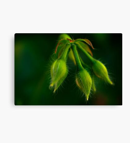 with hairs on her chinny chin chin Canvas Print