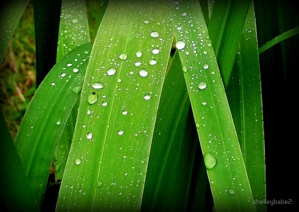 Rain Drops... by shelleybabe2