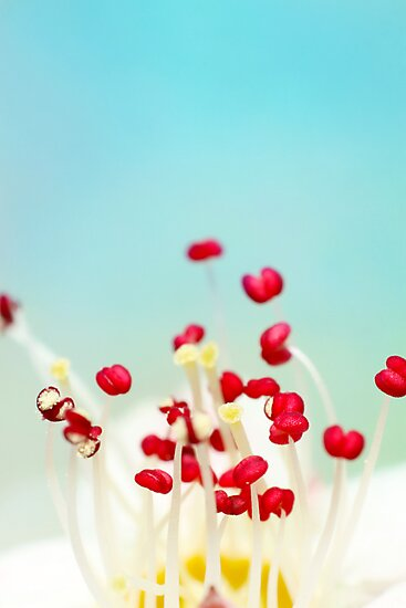 Blooming Candy Red by Sharon Johnstone