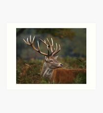 Majestic Red Deer Art Print