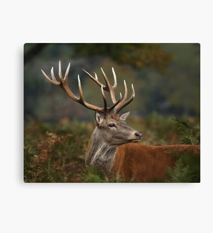 Majestic Red Deer Canvas Print
