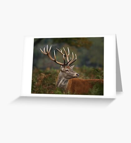 Majestic Red Deer Greeting Card