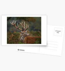 Majestic Red Deer Postcards