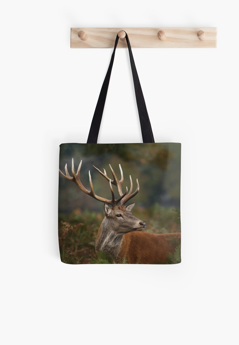 Majestic Red Deer by Patricia Jacobs DPAGB LRPS BPE4