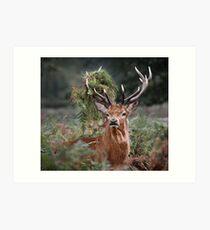 Red Deer Antler Adornment Art Print
