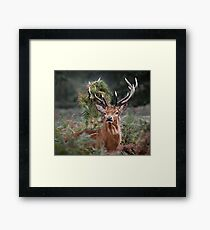 Red Deer Antler Adornment Framed Print