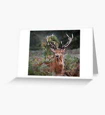 Red Deer Antler Adornment Greeting Card