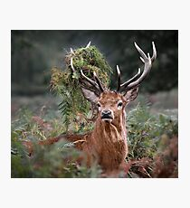 Red Deer Antler Adornment Photographic Print