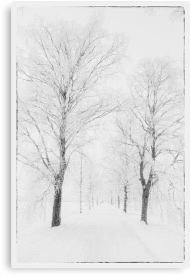 Winter road by Veikko  Suikkanen