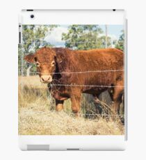 Outback Cow iPad Case/Skin