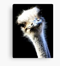 Ostrich Head Portrait Isolated on Black Canvas Print