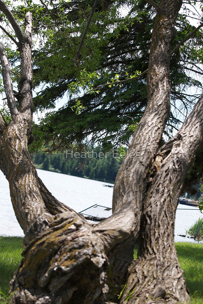 The lake tree by Heather Eeles
