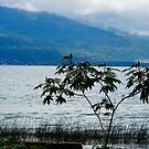 Lone Tree by pcfyi