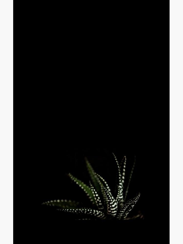 Haworthia Aloe Vera Kaktus Sukkulente weiße Flecken von xiari