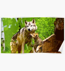 Wild nature - wolves Poster