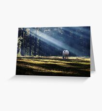 Afternoon Light. Greeting Card
