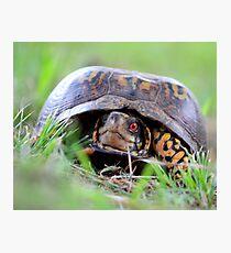 Turtle! Photographic Print