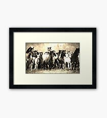 Wild nature - horses Framed Print