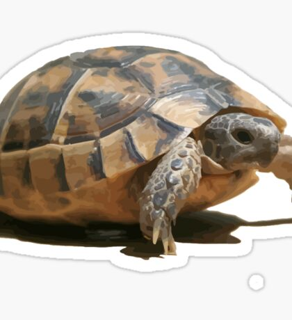 Portrait of a Young Wild Tortoise Isolated Sticker