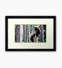 Wild nature - bears Framed Print