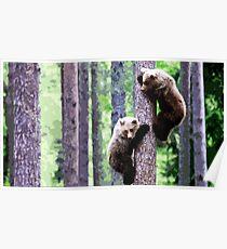 Wild nature - bears Poster