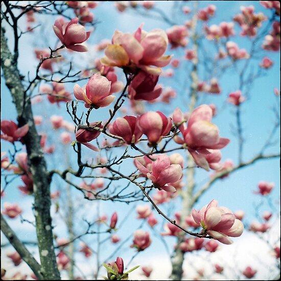 In bloom by Irene2005