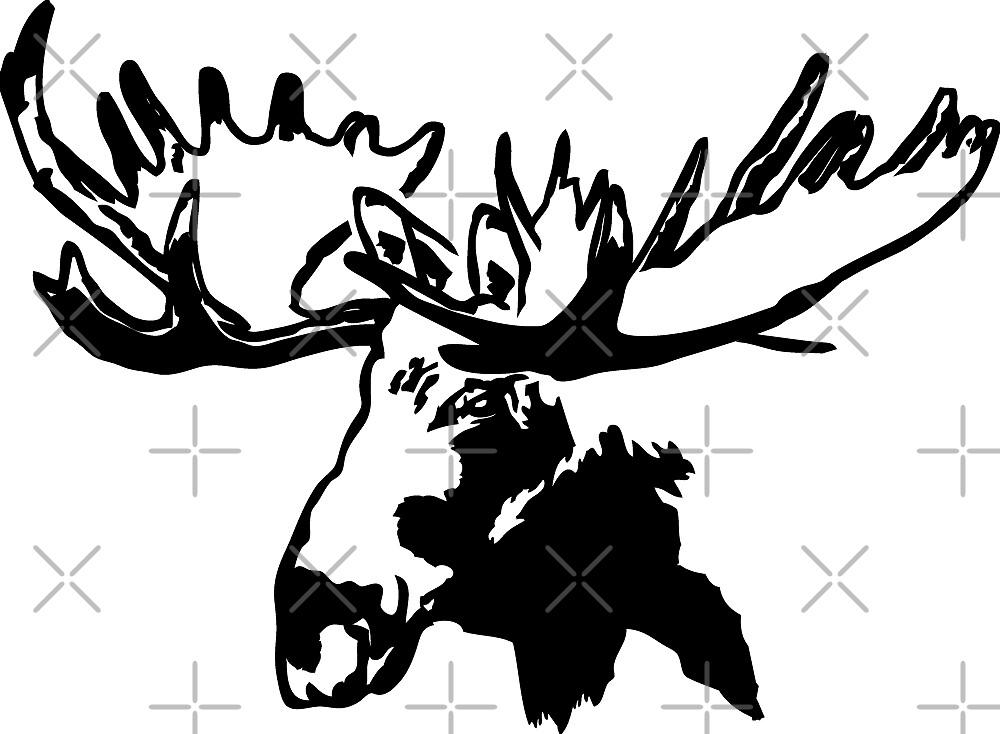 Moose by Port-Stevens