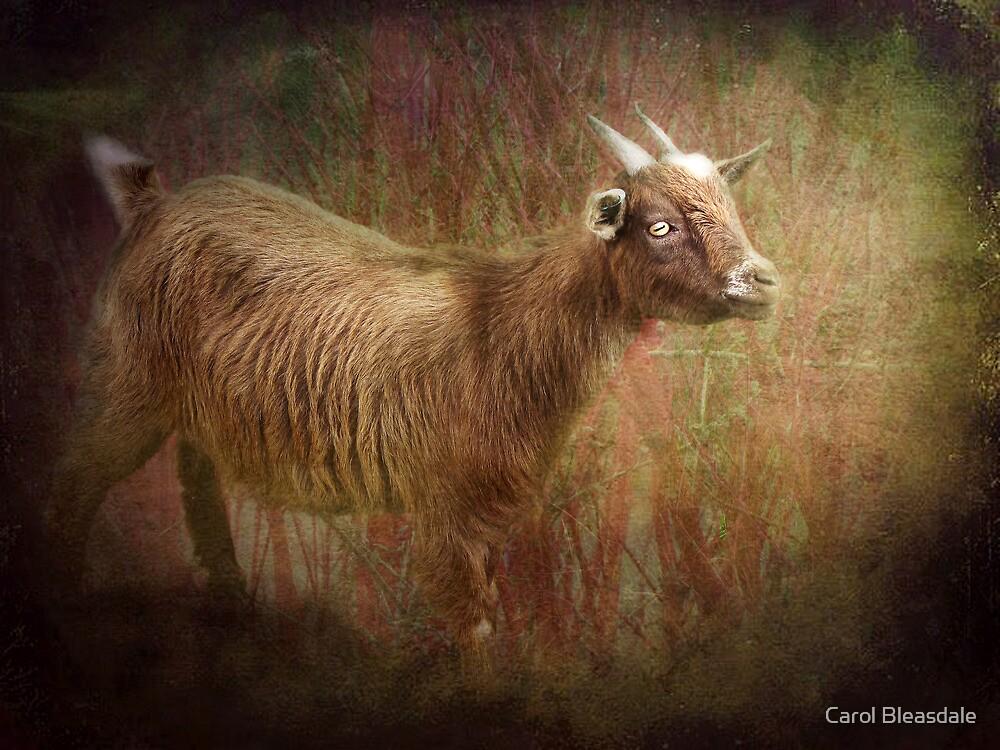 The Eye by Carol Bleasdale