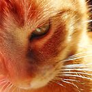 holography cat by kipari