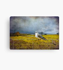 Scissor Tail Flycatcher in the Countryside Canvas Print