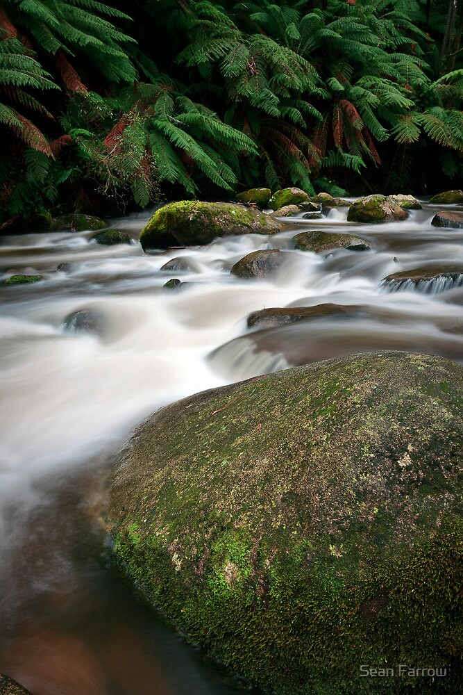 Rocks and Rainfall - Noojee, Victoria, Australia by Sean Farrow