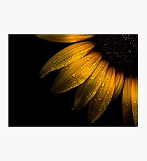 Backyard Flowers 28 Sunflower Photographic Print