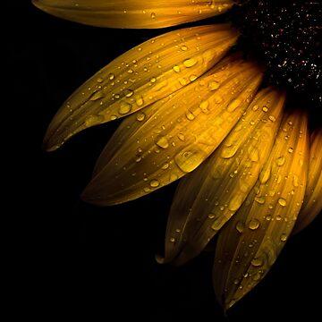 Backyard Flowers 28 Sunflower by learningcurveca