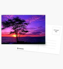 sun set Postcards