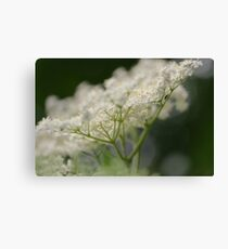 Elderflower Macro Canvas Print