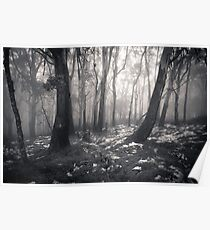 Mt Donna Buang Poster