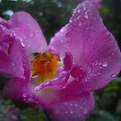 Rose Droplets  by LightPhonics