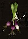 Spring Onions by Barbara Wyeth