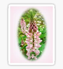 Pink Lupin Flowers Sticker