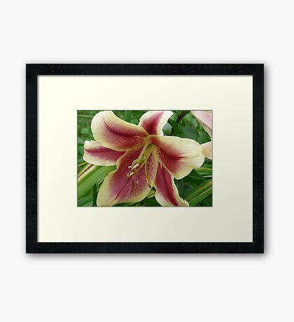 Gorgeous Lily Framed Print