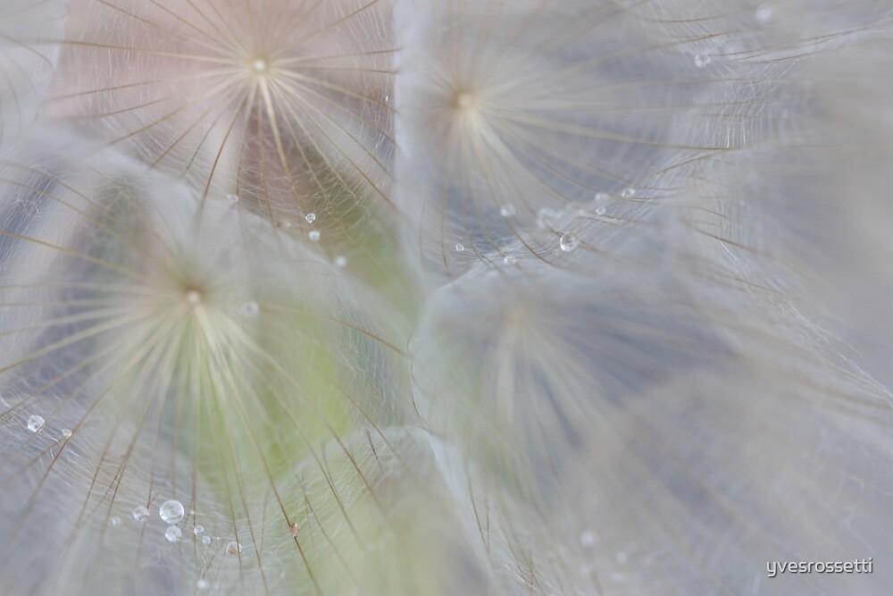 crystal tears in weightlessness by yvesrossetti