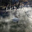 A Winter, not long ago by Brian Bo Mei