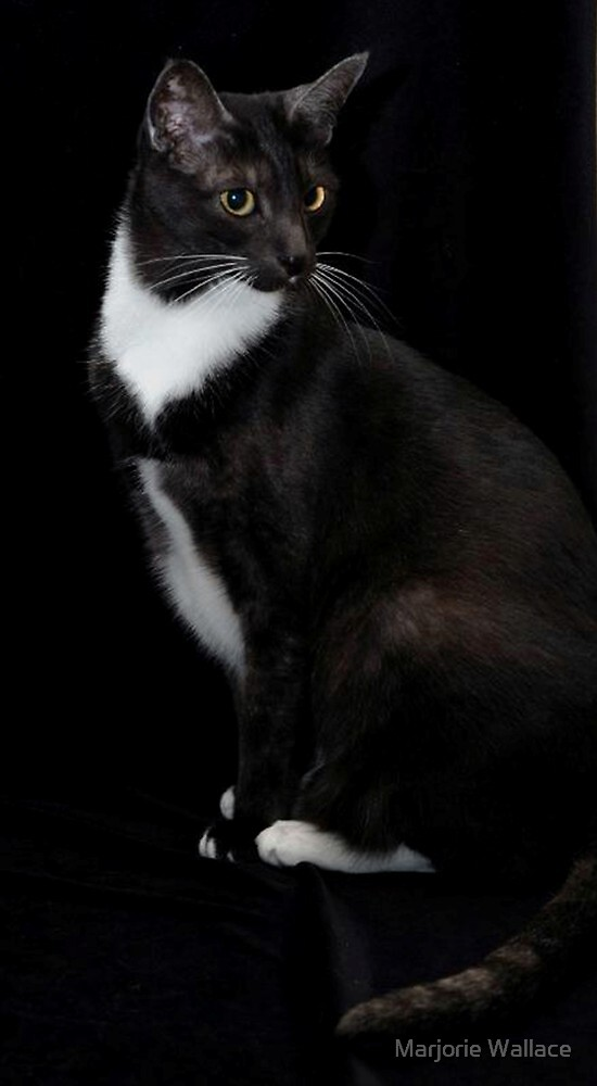 My gorgeous Smokey by Marjorie Wallace