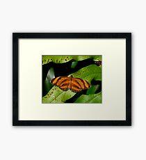Oak Tiger. Framed Print